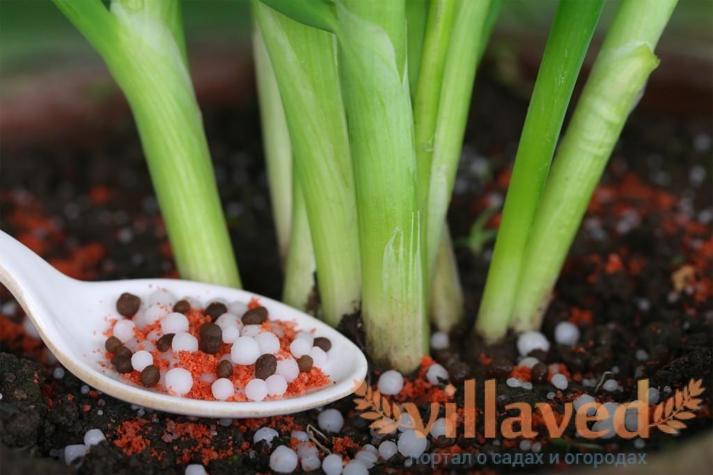 Удобрения для выращивания лука 7