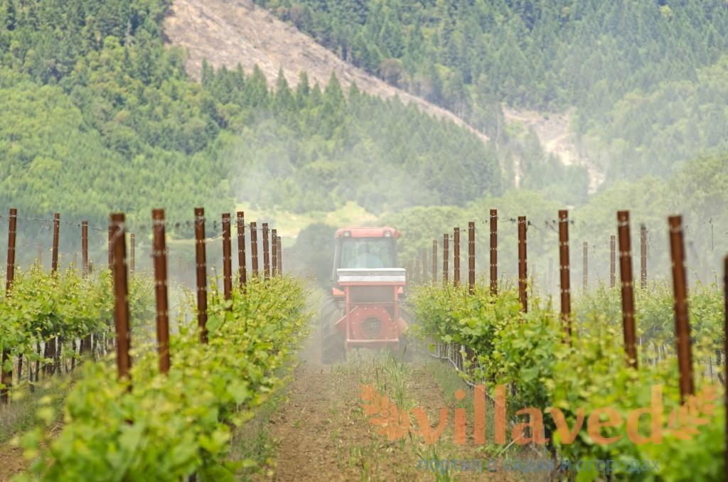 Что такое фунгициды для обработки виноградников