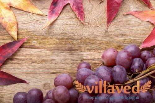 Сорта винограда Павловского