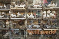 Кормушки и поилки для голубей