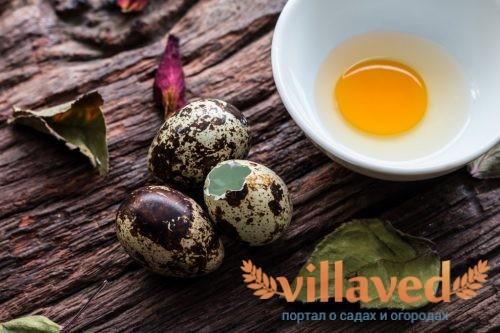 можно ли есть перепелиные яйца при аллергии