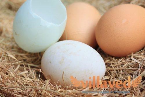 Сколько дней сидит утка на яйцах