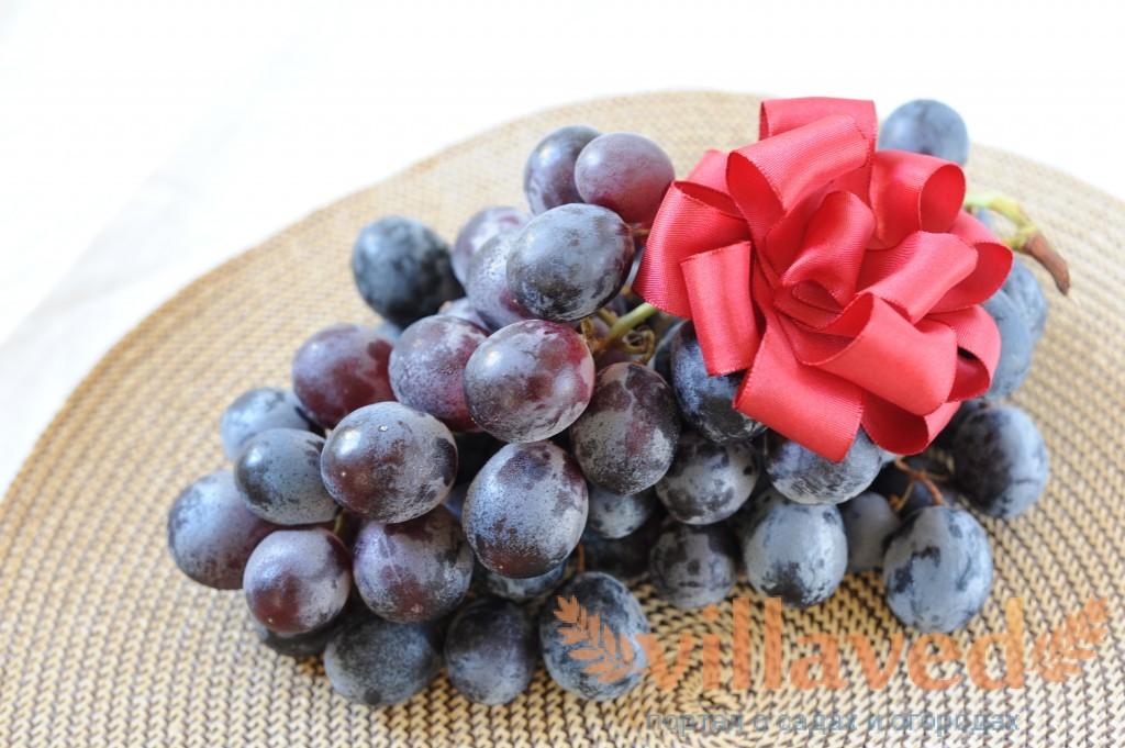 Виноград Фавор: фото, характеристика, описание сорта