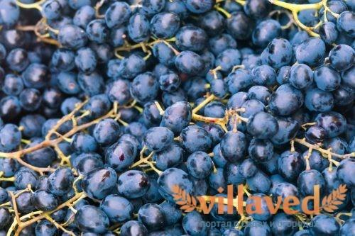 Виноград Красень