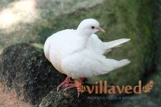 Ласота для голубей и птиц