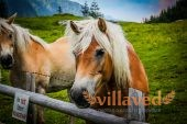 Сколько живет лошадь