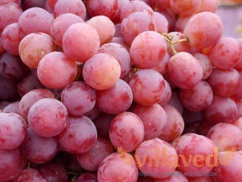 Виноград Велес