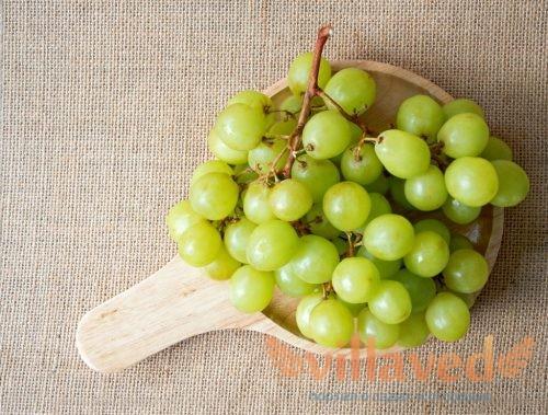 Виноградный сорт Прима описание