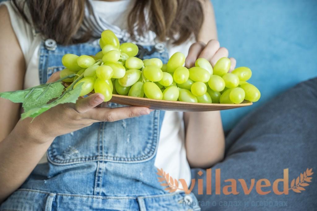 Почему пучит живот от винограда