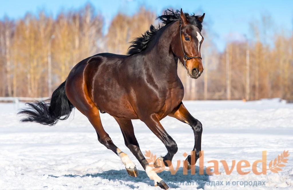 К чему снится лошадь белая, черная