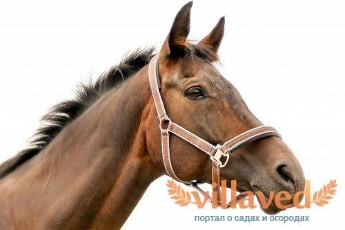 Как запрягать лошадей