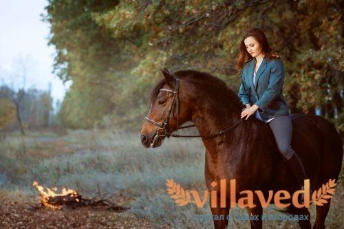 Караковая масть лошади