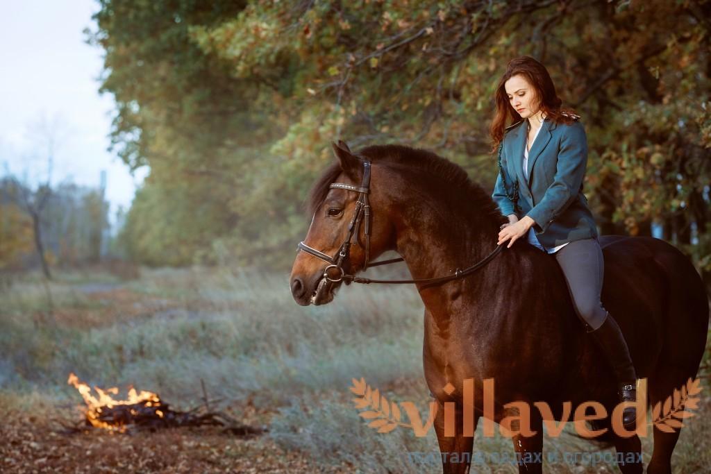 Гнедая масть лошади: описание, фото
