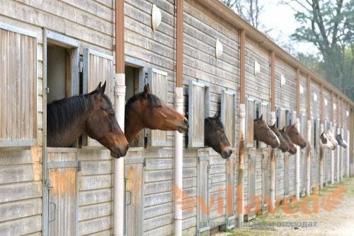 Конюшня для лошадей
