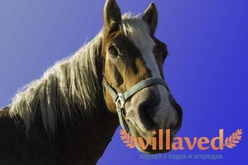 Мыт у лошади