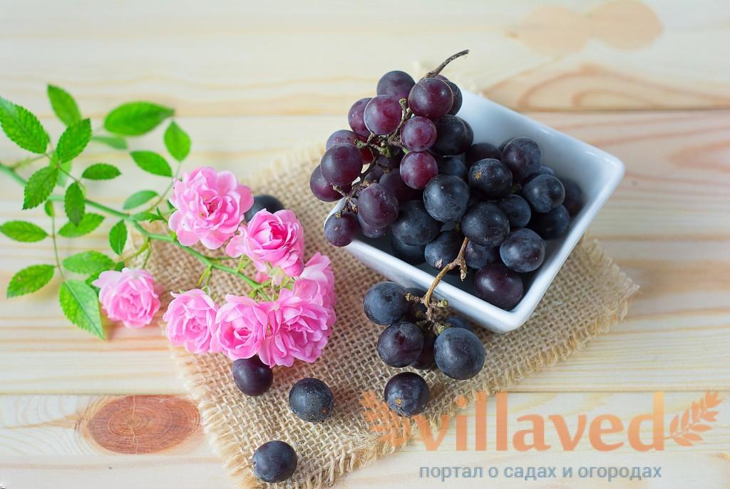 Понос от винограда лечение у взрослого