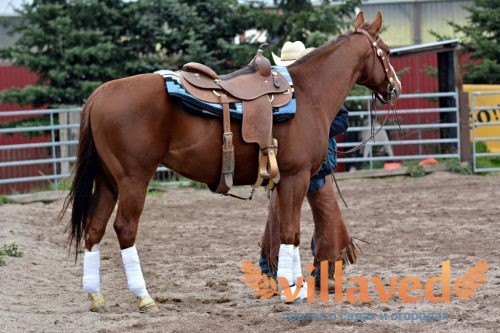 Седло для лошади: как сделать, виды, описание
