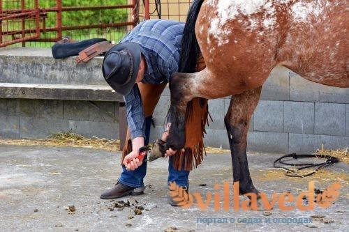 Уход и содержание лошадей