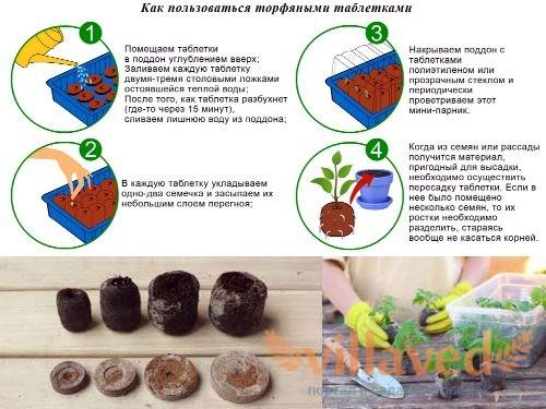 Выращивание рассады в торфе