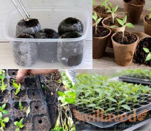 Выращивание перца в кассетах
