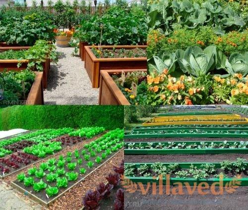 Выращивание органических овощей