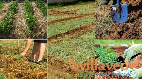 Переход на органическое земледелие