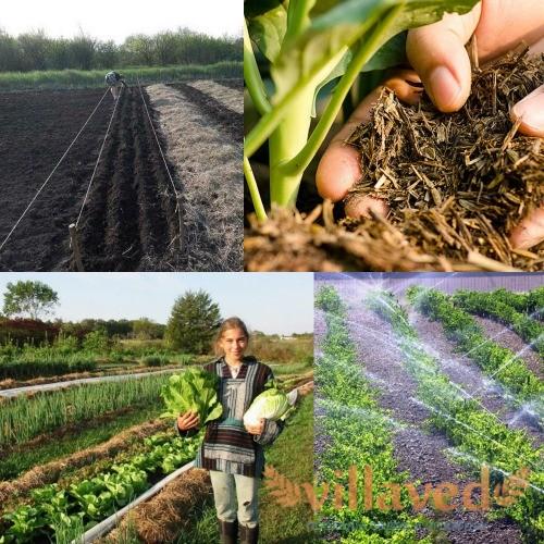 Органическое земледелие на практике