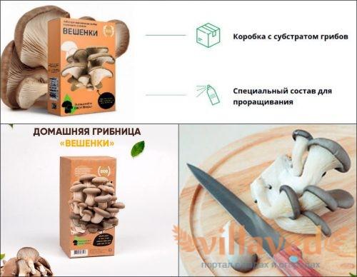 Домашняя грибница вешенок состав набора