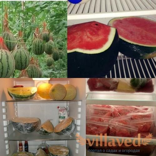 Как хранить арбуз в холодильнике