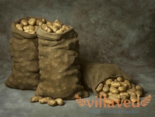 Самая низкая температура хранения картофеля