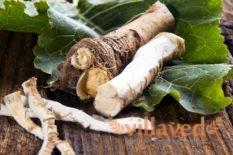 Как хранить корень хрена в домашних условиях