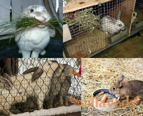 Корма для кроликов зимой
