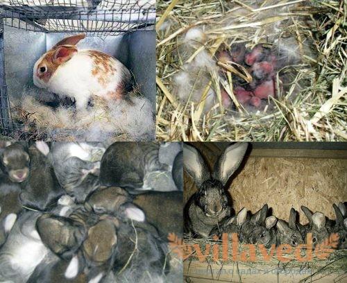 Выведение кроликов зимой