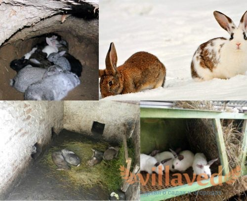 Виды зимнего содержания кроликов