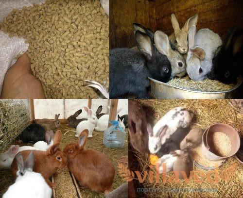 Какое зерно можно кроликам