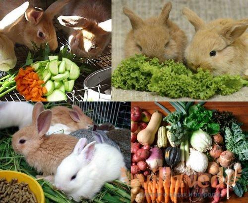 Доля сочных кормов в рационе кроликов
