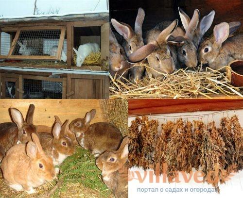 Веточный корм для кроликов