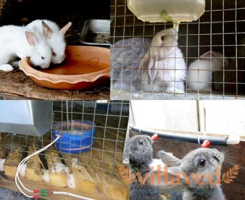Поение кроликов зимой