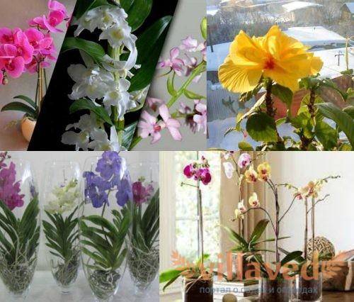 Правильный уход за орхидеями зимой