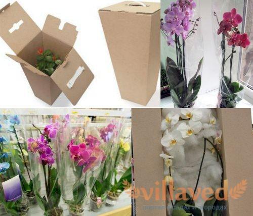 Как перевозить орхидею зимой