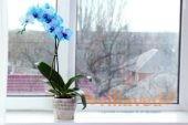 Зимний уход за орхидеями