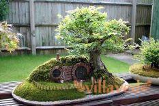 Как вырастить бонсай дома