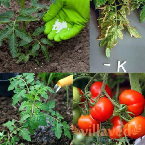 Комплексные удобрения для томатов