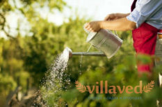 Нашатырный спирт для овощей