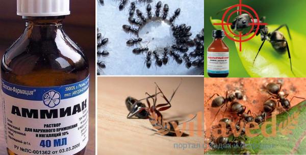 Применение нашатыря против муравьев
