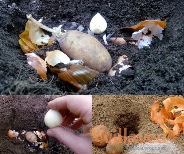 Подкормка картошки луковой шелухой