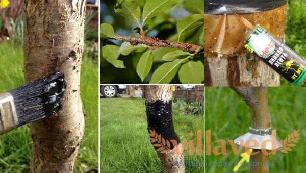 Муравьи на деревьях что делать