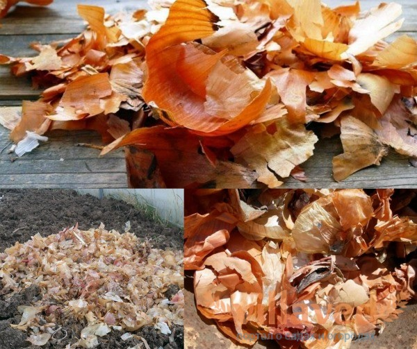 Луковая шелуха в огороде осенью