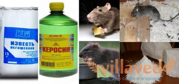 Борьба с крысами народными средствами