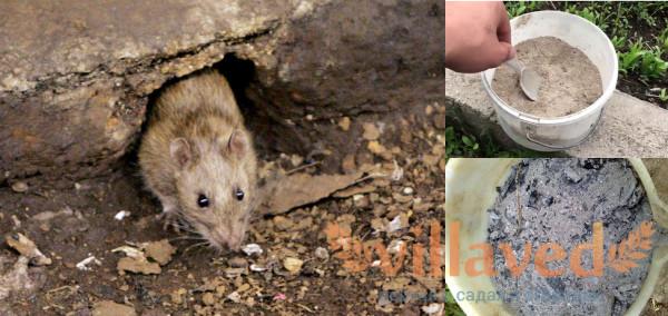 Как избавиться от крыс золой